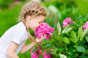 Image result for تاثیر گل و گیاه بر سلامتی